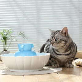 Cat sitting with iPettie Tritone Ceramic Pet Fountain with blue Tower.