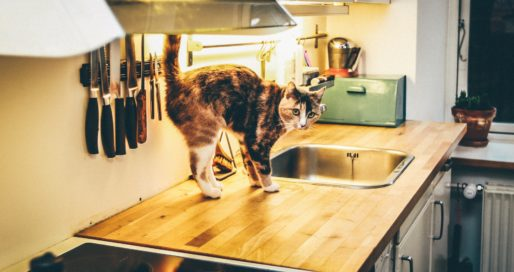 Cat standing on a kitchen counter, looking especially guilty.
