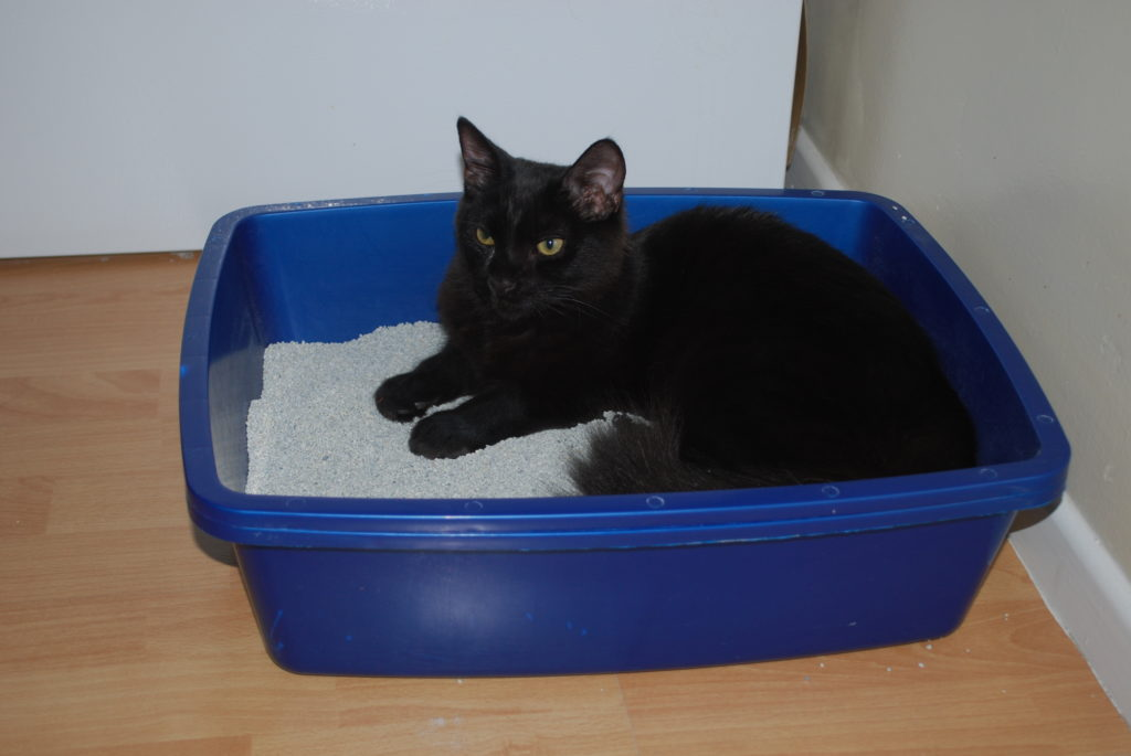 Cat lying in a litter box