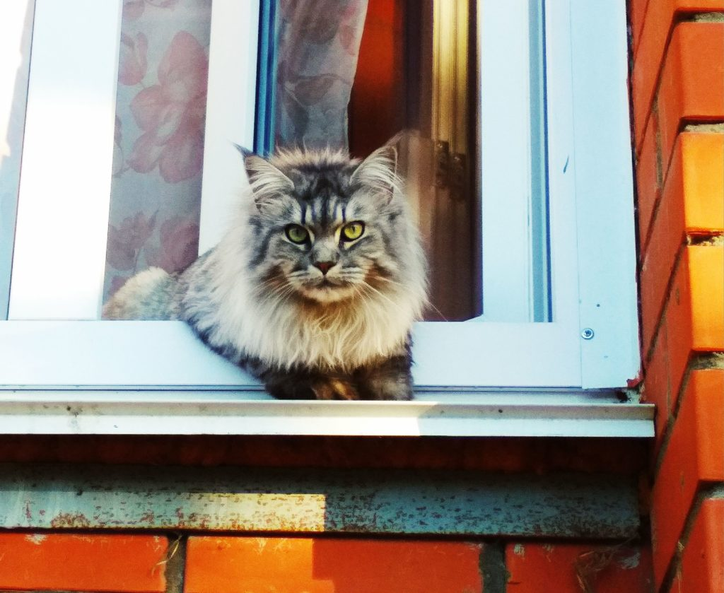 Cat sitting half in a window, half inside, half outside