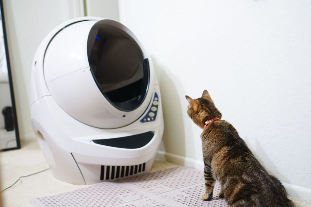 Cat sitting and looking into a spherical robotic automatic litter box
