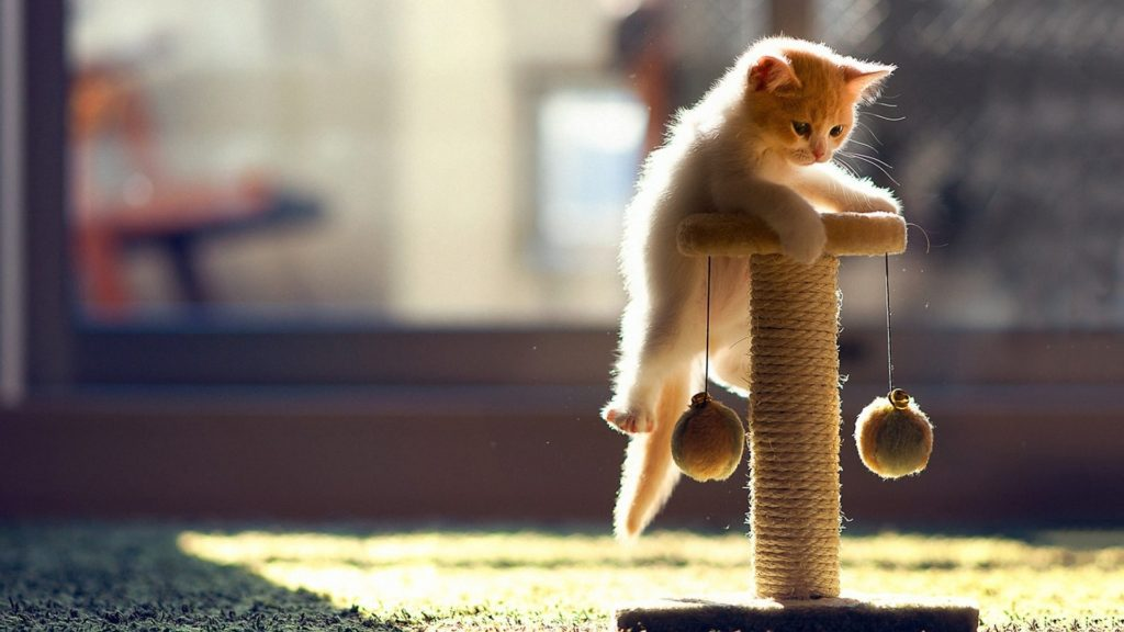 Kitten climbing on cat tree