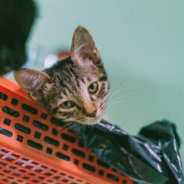 Cat lying on a plastic garbage bag