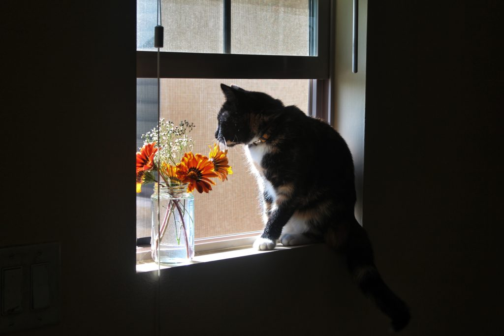 Cat sitting in a window next to a vase of flowers