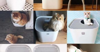 Modkat Top Entry Litter Box Collage of Cats