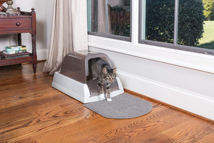 PetSafe ScoopFree Self-Cleaning Litter Box with a cat exiting the box.