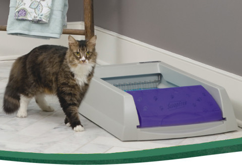 PetSafe ScoopFree Self-Cleaning Litter Box with a cat standing next to it.