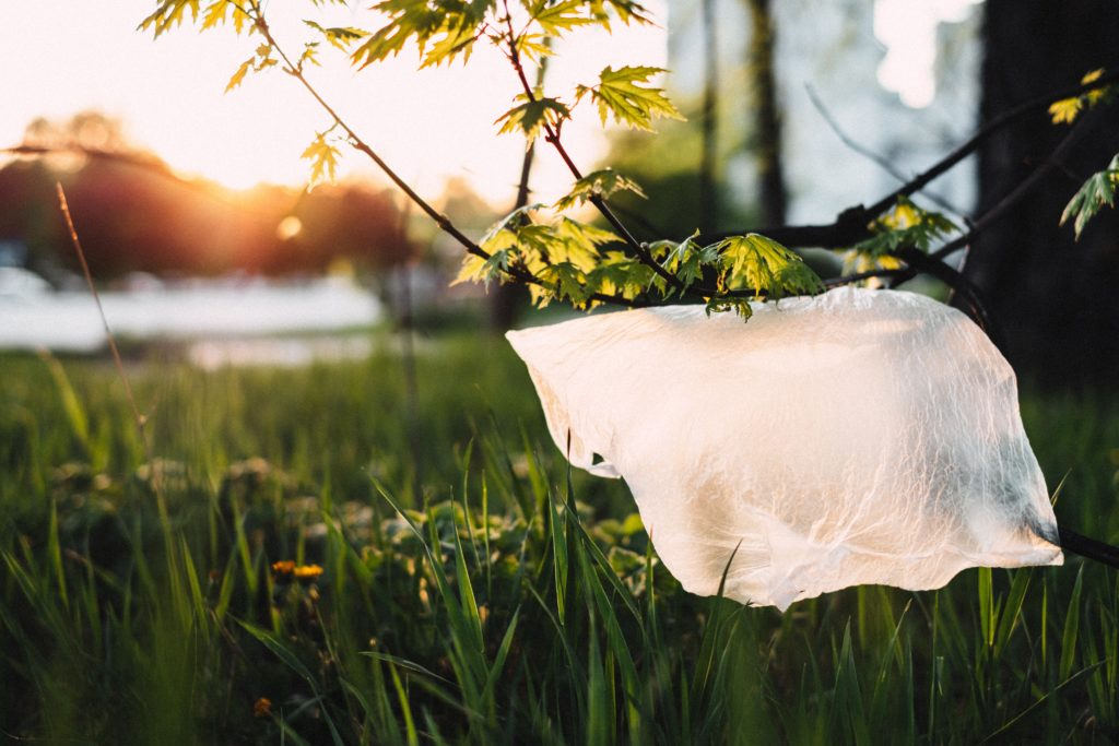 Plastic bag caught in a tree branch